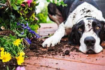 Gedragstherapeut honden Utrecht