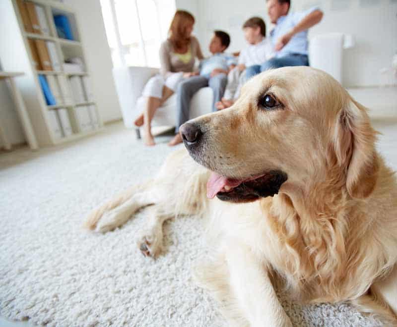 Wanneer gedragstherapie honden Utrecht