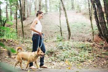 Gedragstherapie honden tarieven