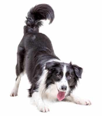Hondengedragstherapie Utrecht