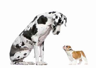 Partners hondengedragstherapie Utrecht