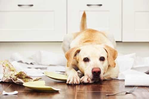 Werkwijze hondengedragstherapie