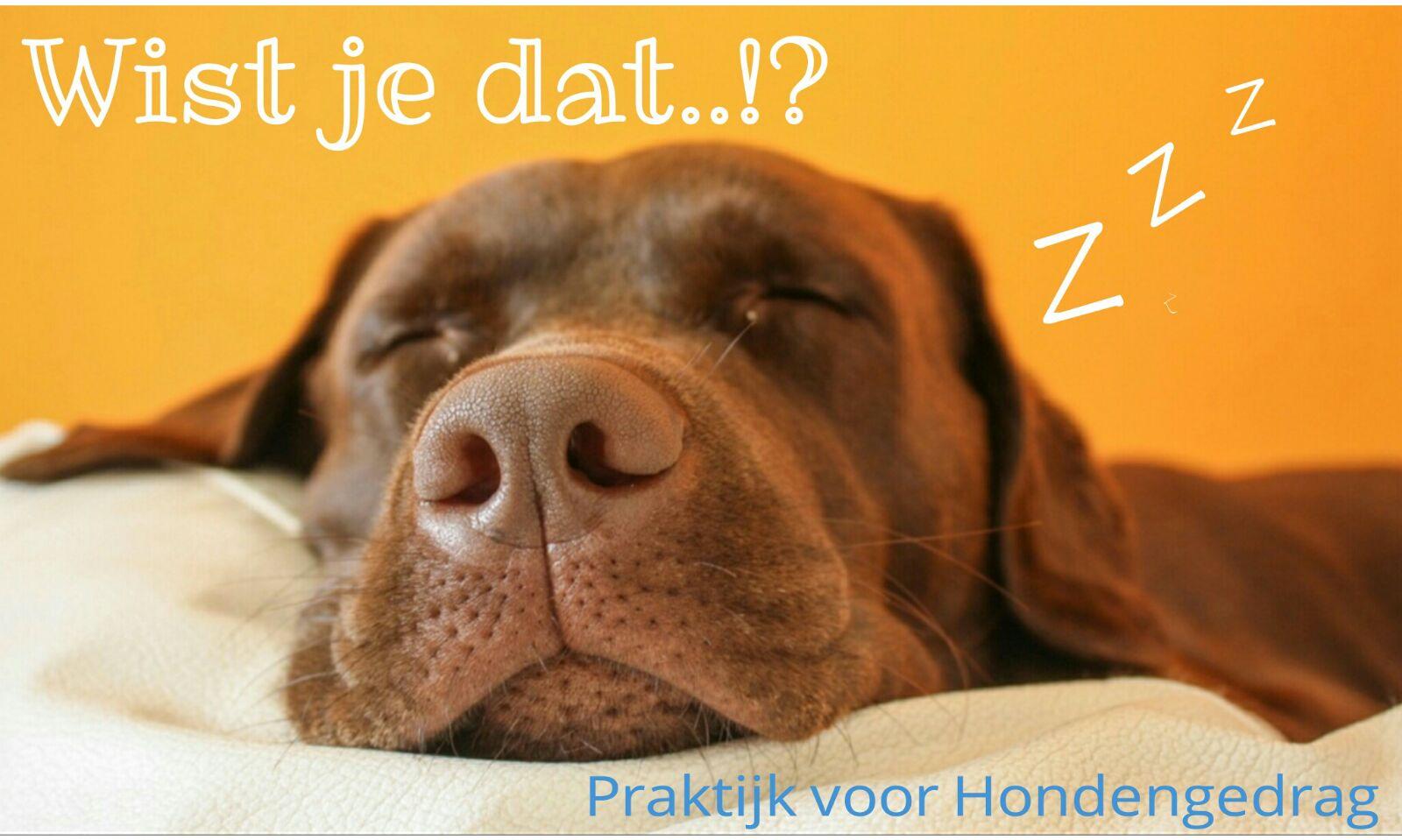 Slaapgedrag bij honden