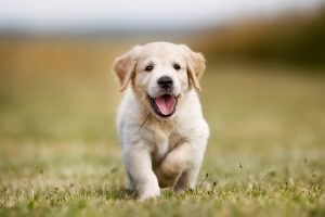 Een gelukkige pup door goede begeleiding